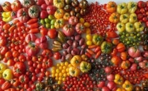 tomaat-2,7khd
