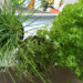 Verse groene kruiden - Koolhydraatarm recept
